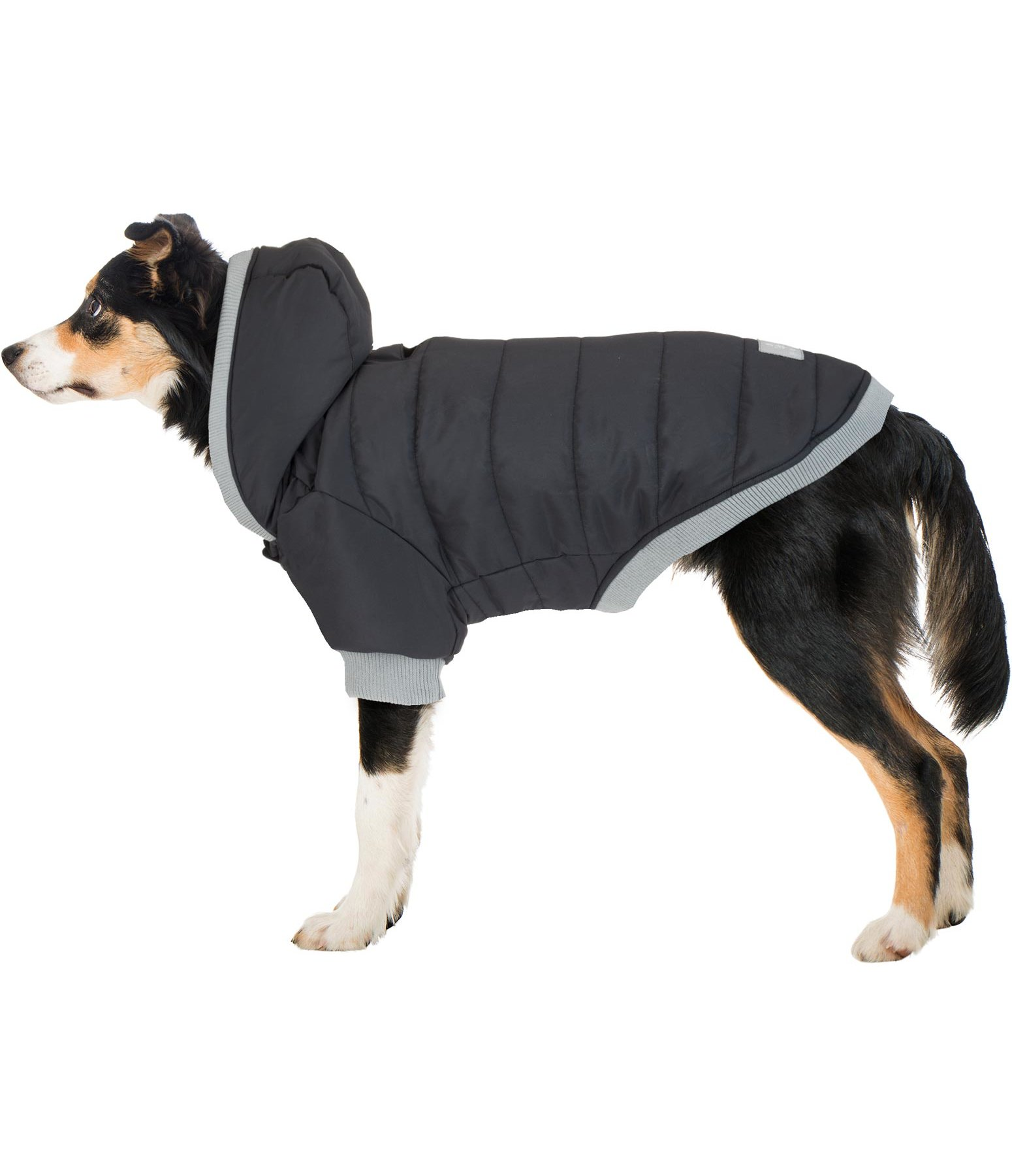 Quilted Dog Coat Blair, 200g