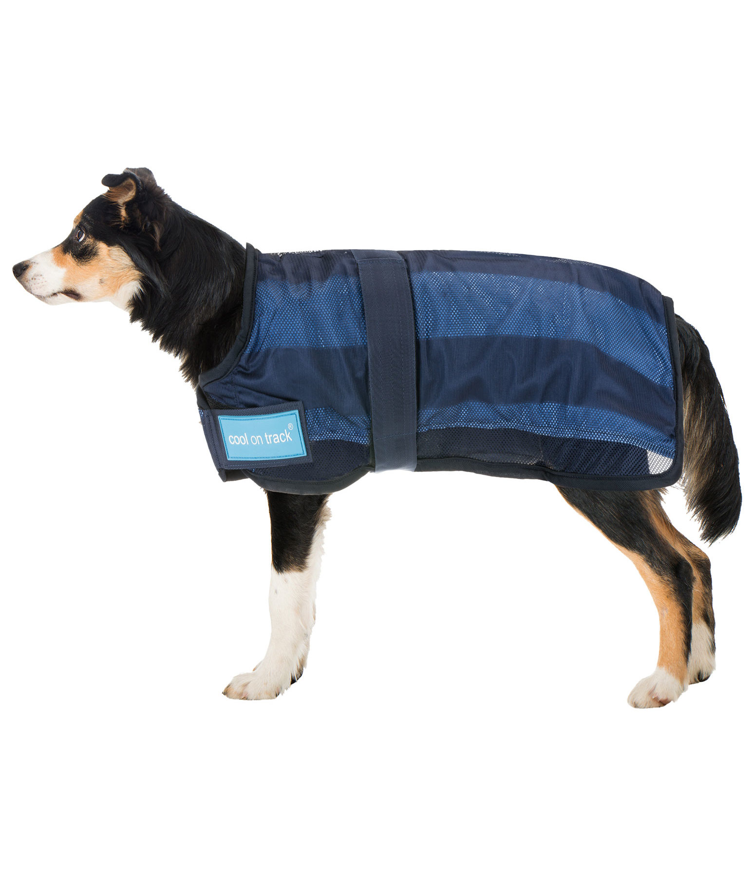 Cool on Track Dog Coat with Cooling Function