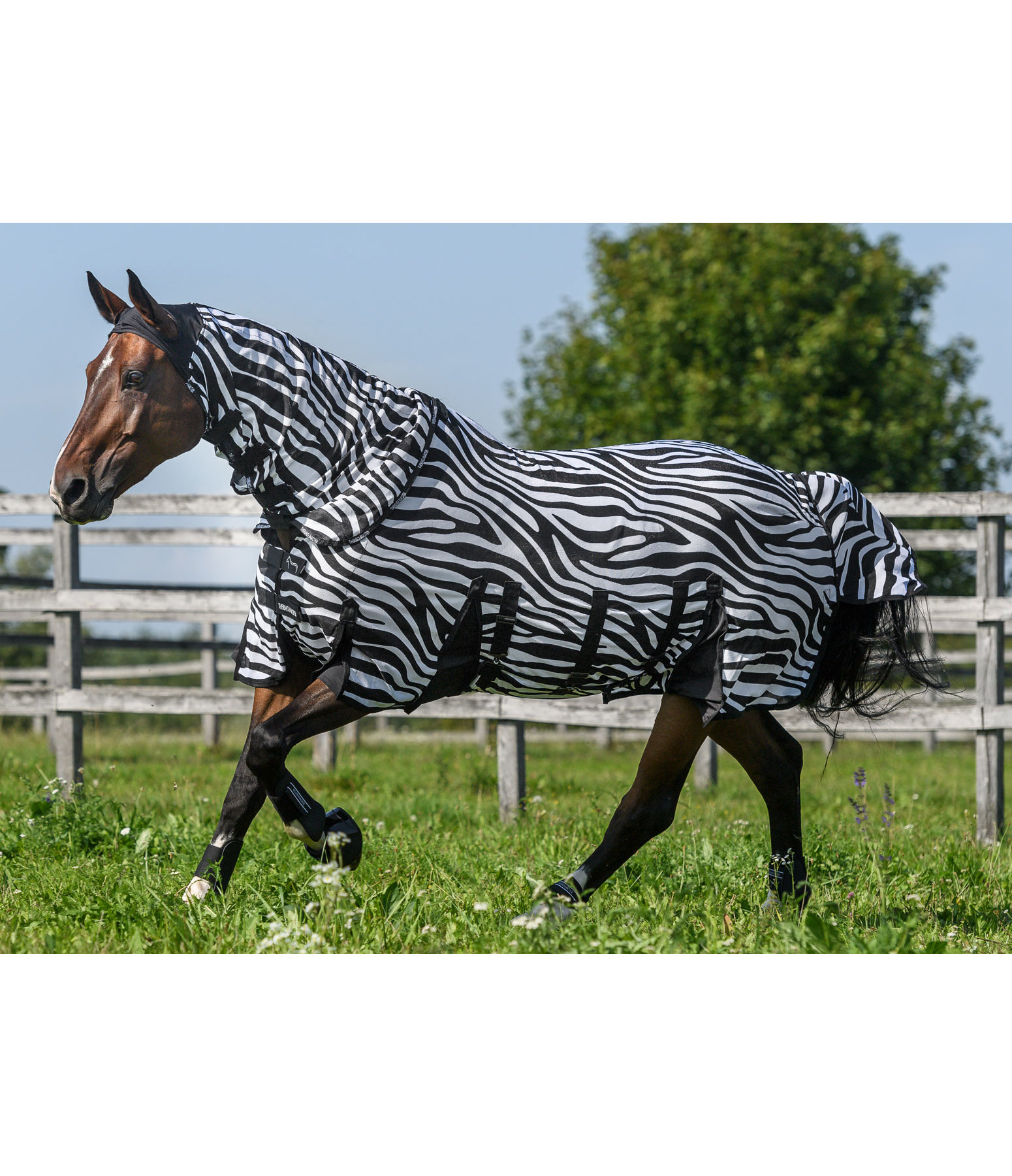 Full Neck Fly Rug Falina Zebra With Belly Pad