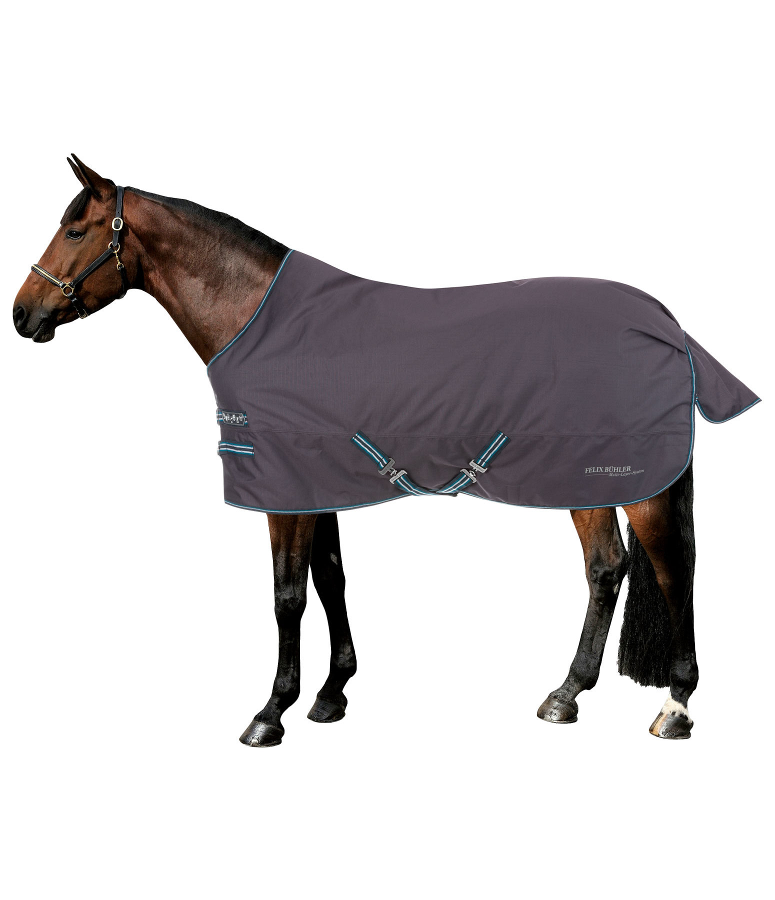4 in 1 Regular Neck Turnout Rug with multi-layer system, 0-300g