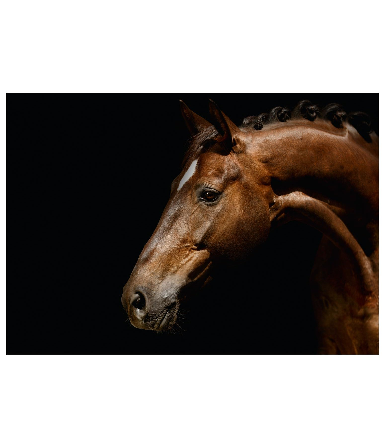 Greeting Card Brown Horse