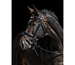 CLARIDGE HOUSE Flash Bridle Bentota - 320755-F-S - 4